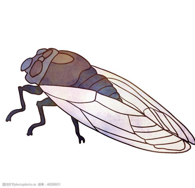 蝴蝶知了卡通夏日昆虫图片