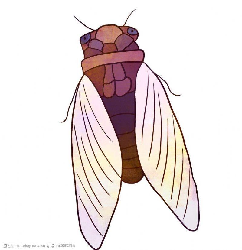 蝴蝶知了卡通夏日昆虫元素素材图片
