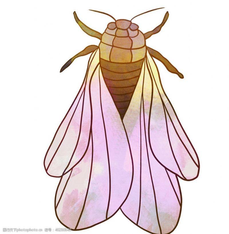 蝴蝶知了手绘图片