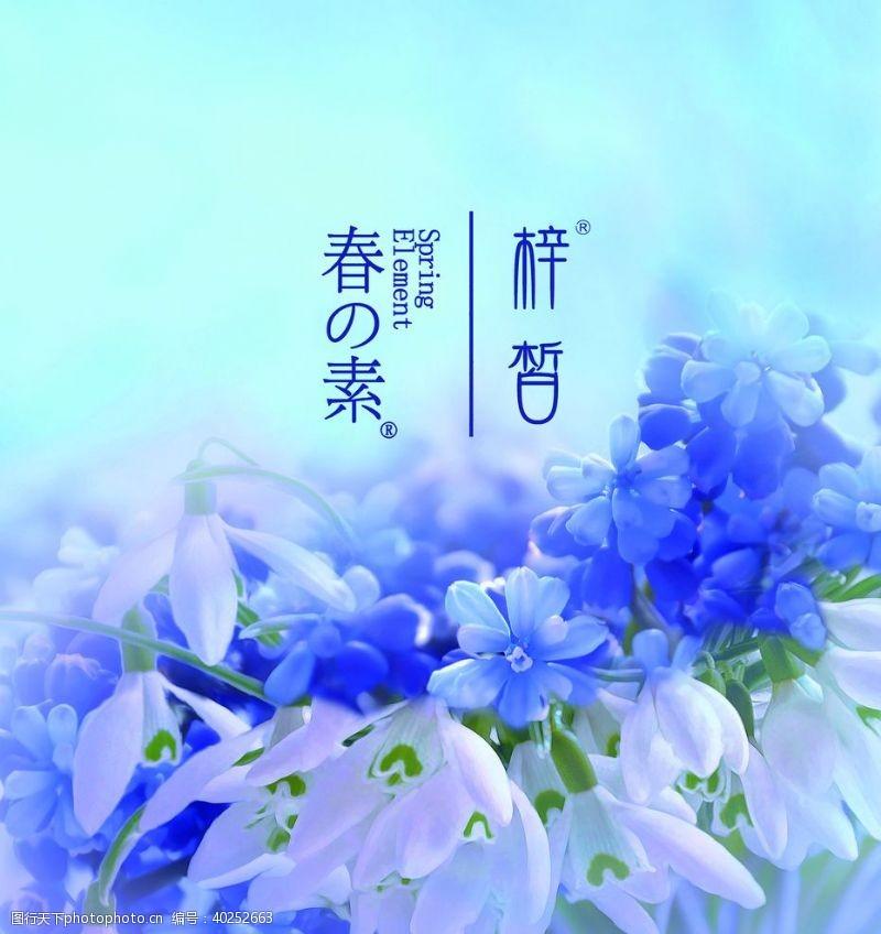 百合花紫色花图片