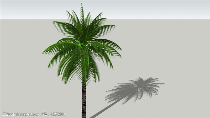 大师3D植物树木椰子树图片