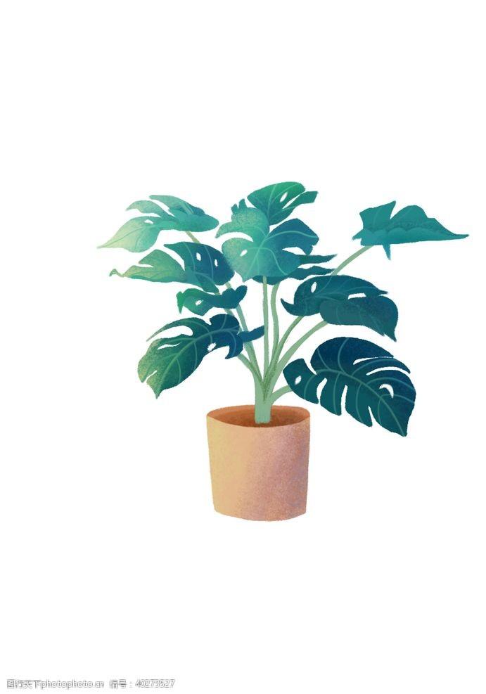花盆龟背竹图片