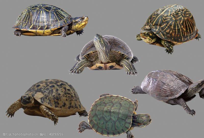 分层图海龟图片