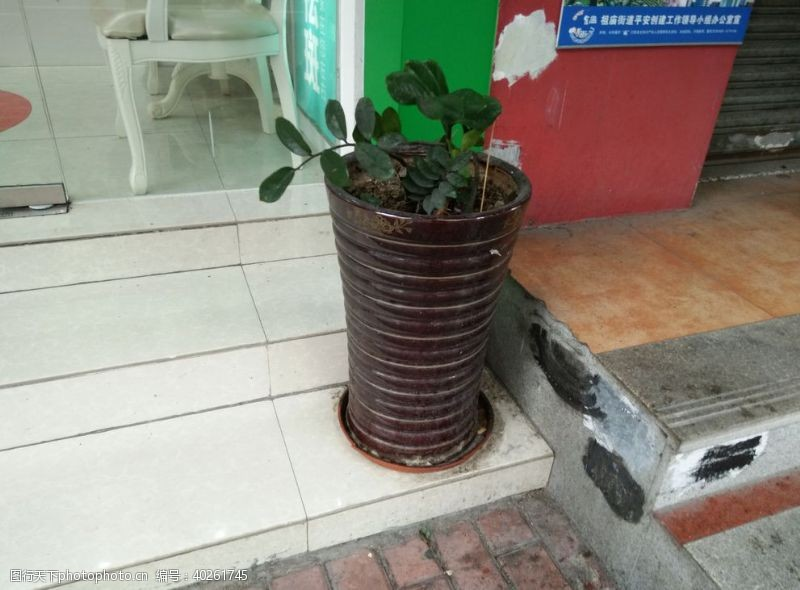 花坛花图片
