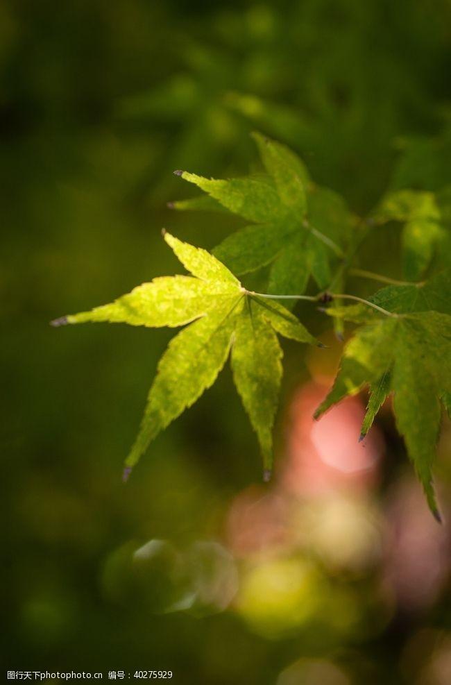 绿色绿叶图片
