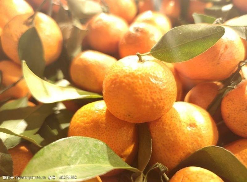 橘子沙糖桔图片