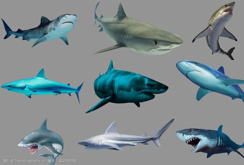 海洋鲨鱼图片