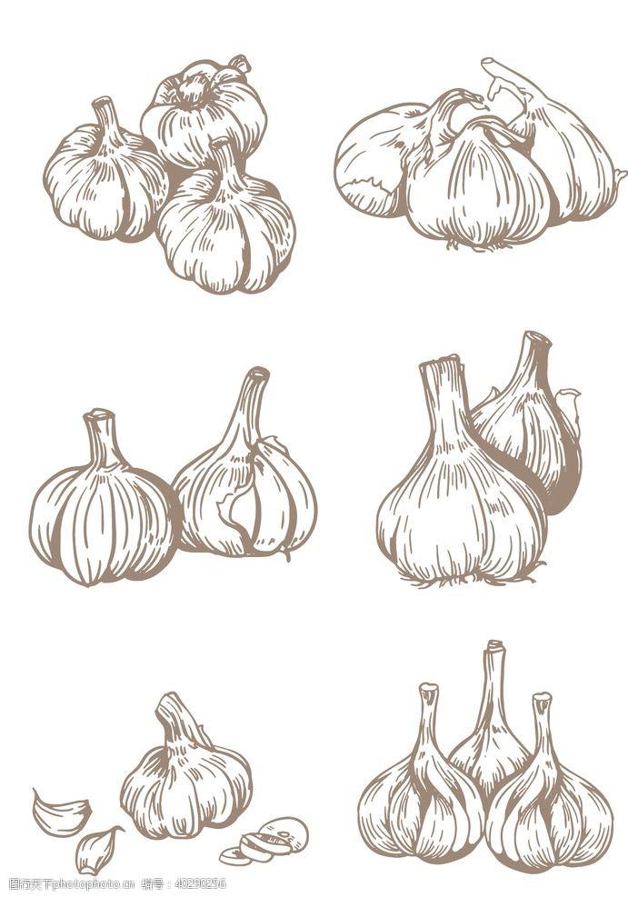 手绘线描调味品大蒜图片