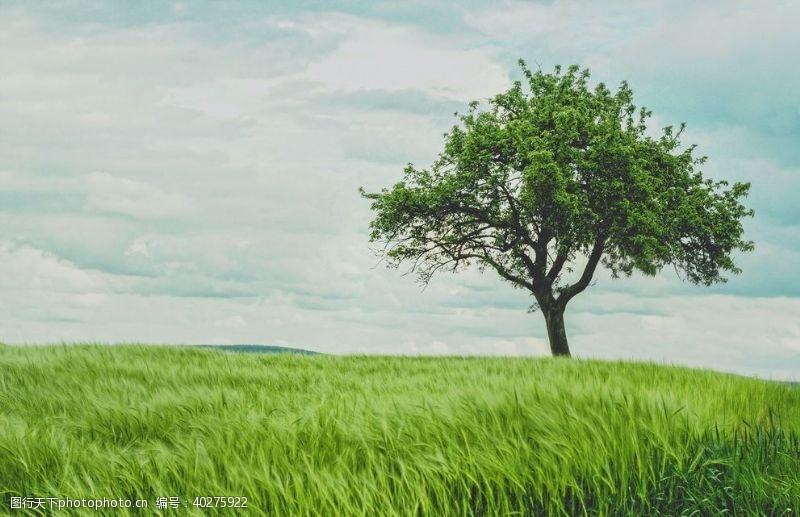 绿色树图片