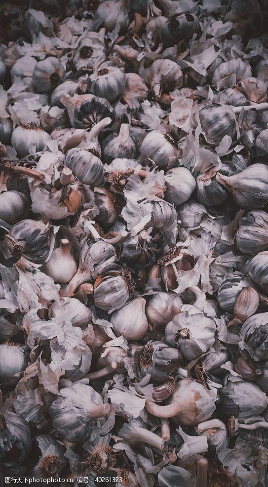 大蒜蒜图片