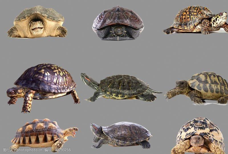 海洋乌龟图片