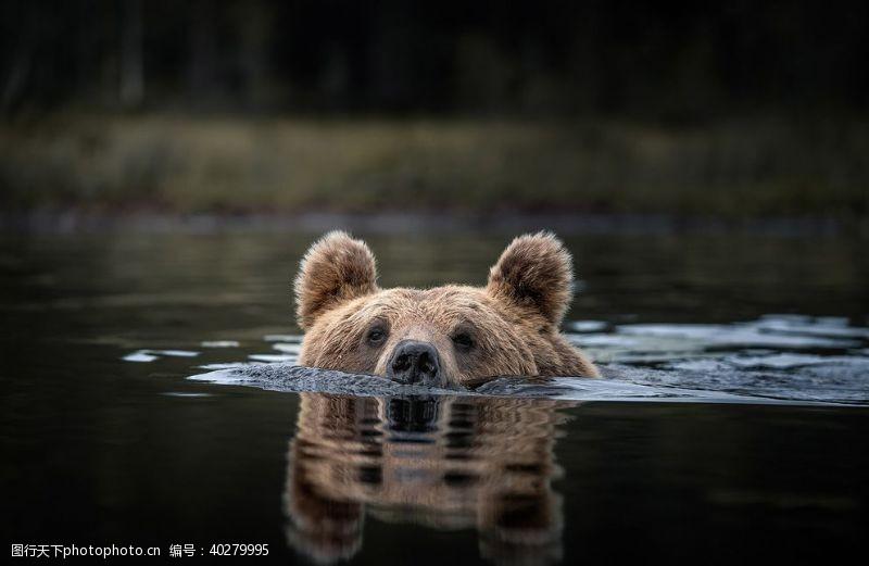 小熊熊图片
