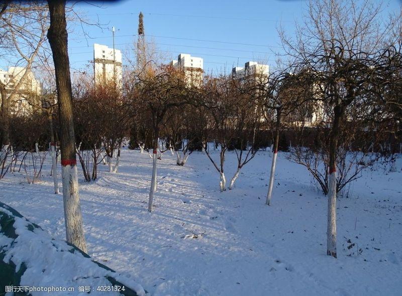 雪地上的小树林图片