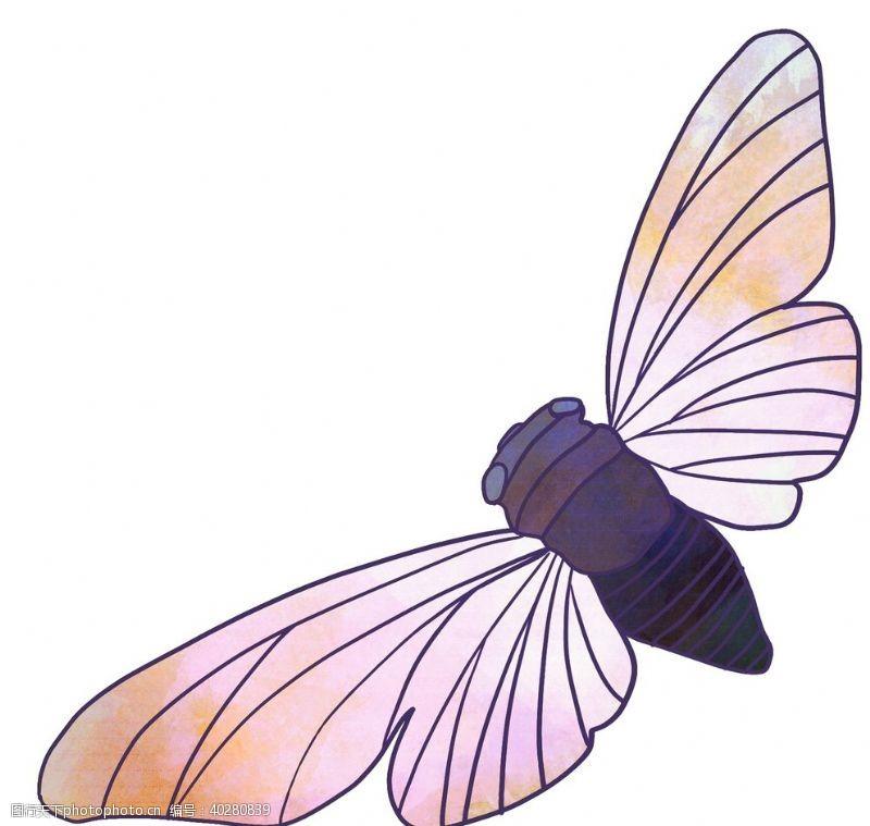 蝴蝶张开翅膀的知了手绘图片