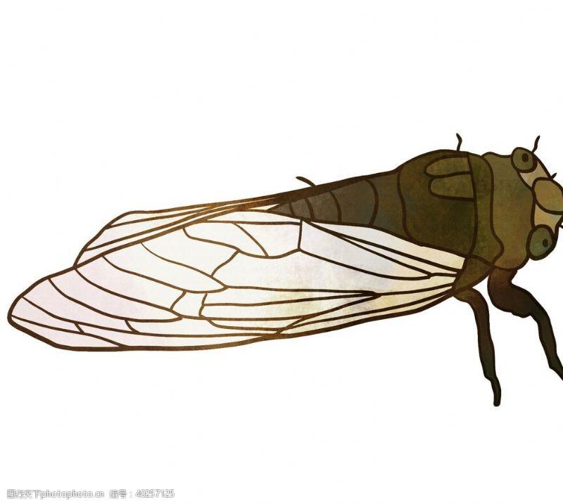 翅膀知了卡通夏日昆虫元素素材图片