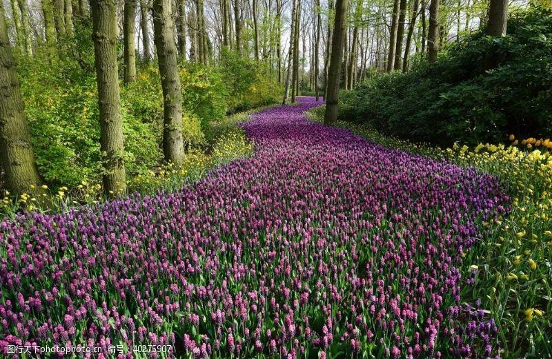 花园紫色花朵小路图片