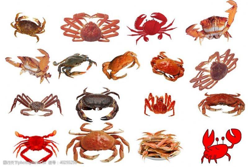 分层图螃蟹图片