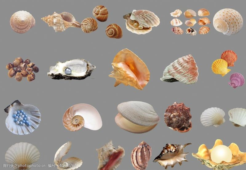 分层图贝壳图片