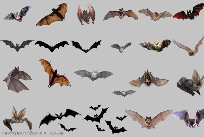 分层图蝙蝠图片