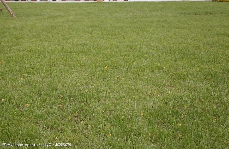 园林绿化草坪图片