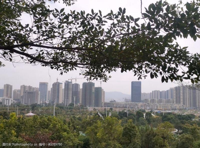 个性城市森林图片