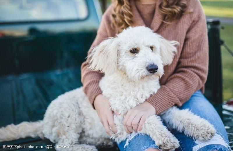 生物世界宠物狗图片