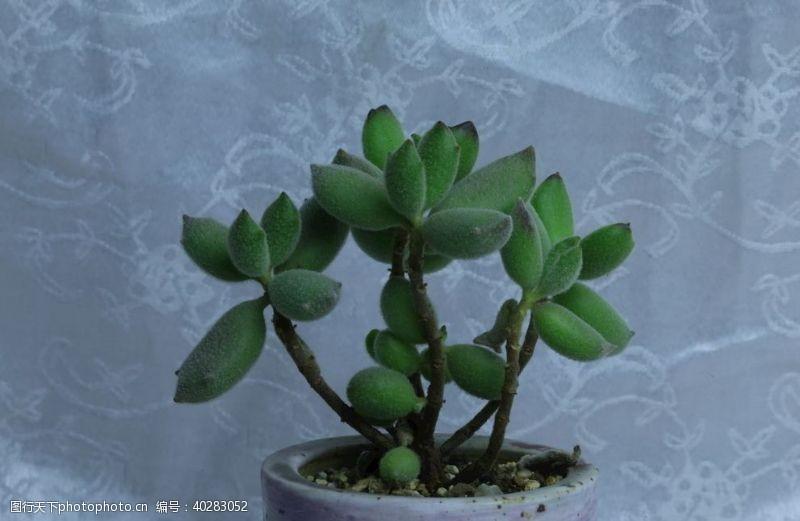 盆栽多肉植物图片