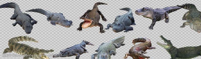 鳄鱼汇总图片