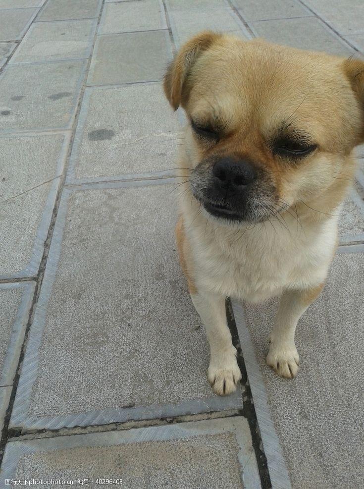 生物世界狗图片