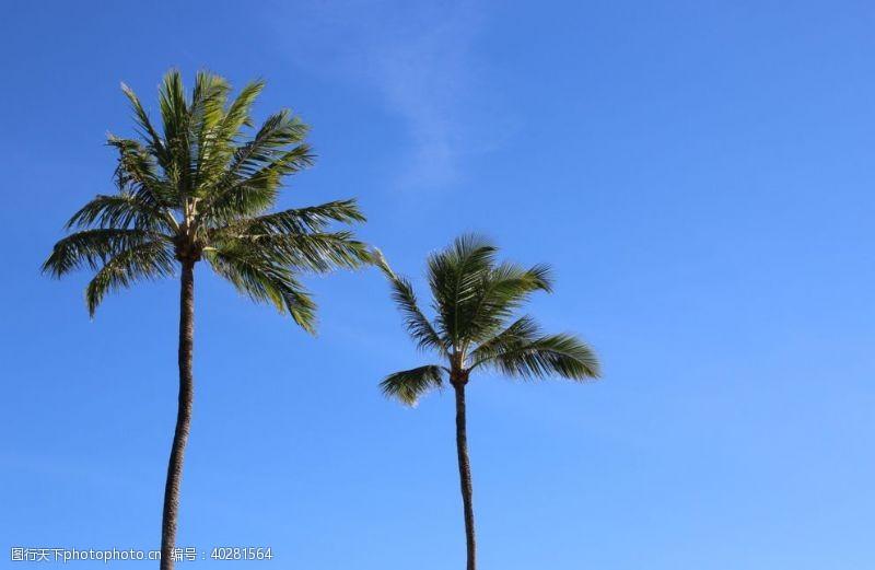 度假海边的椰子树图片