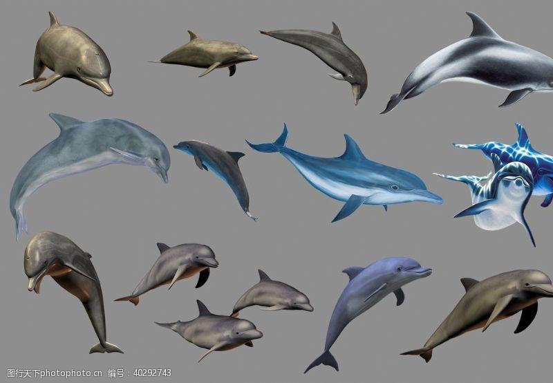 分层图海豚图片