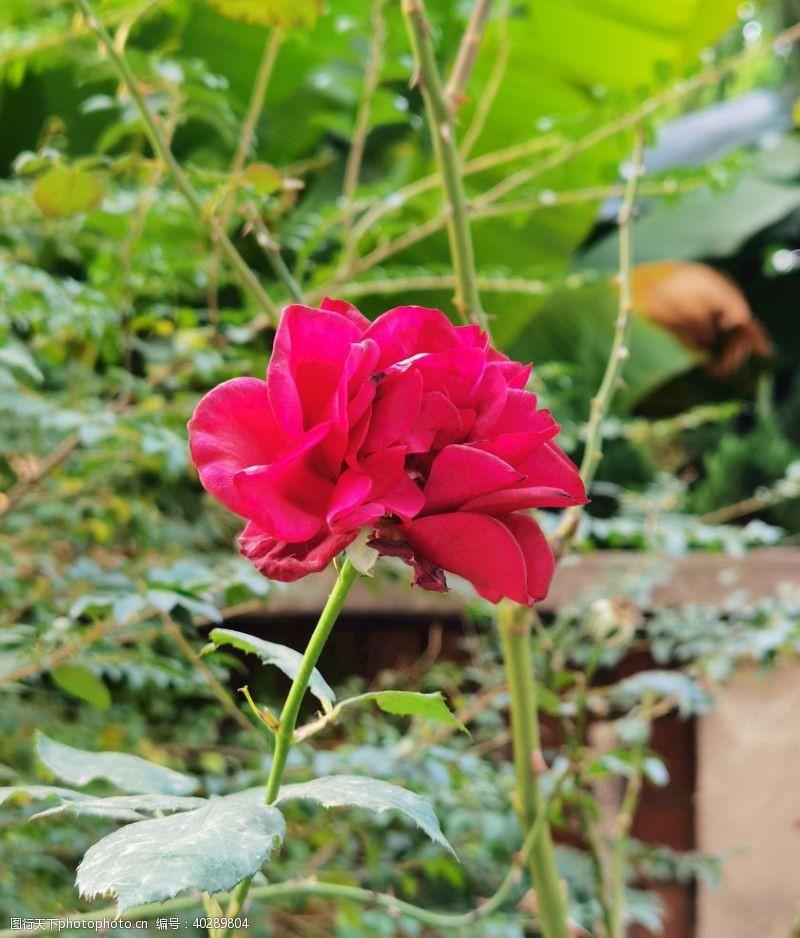 春季花卉图片