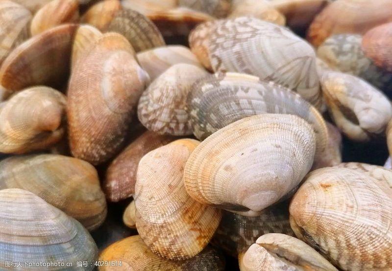 海螺黄蚬子大连产图片