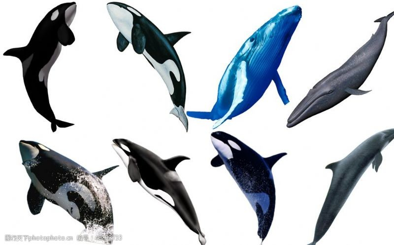 鲸鱼鲸图片