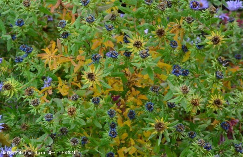 园林绿化枯花图片