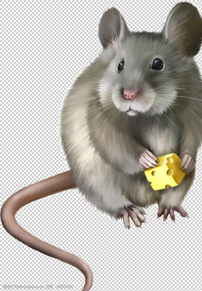 299dpi老鼠图片