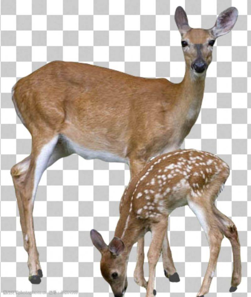 299dpi鹿图片