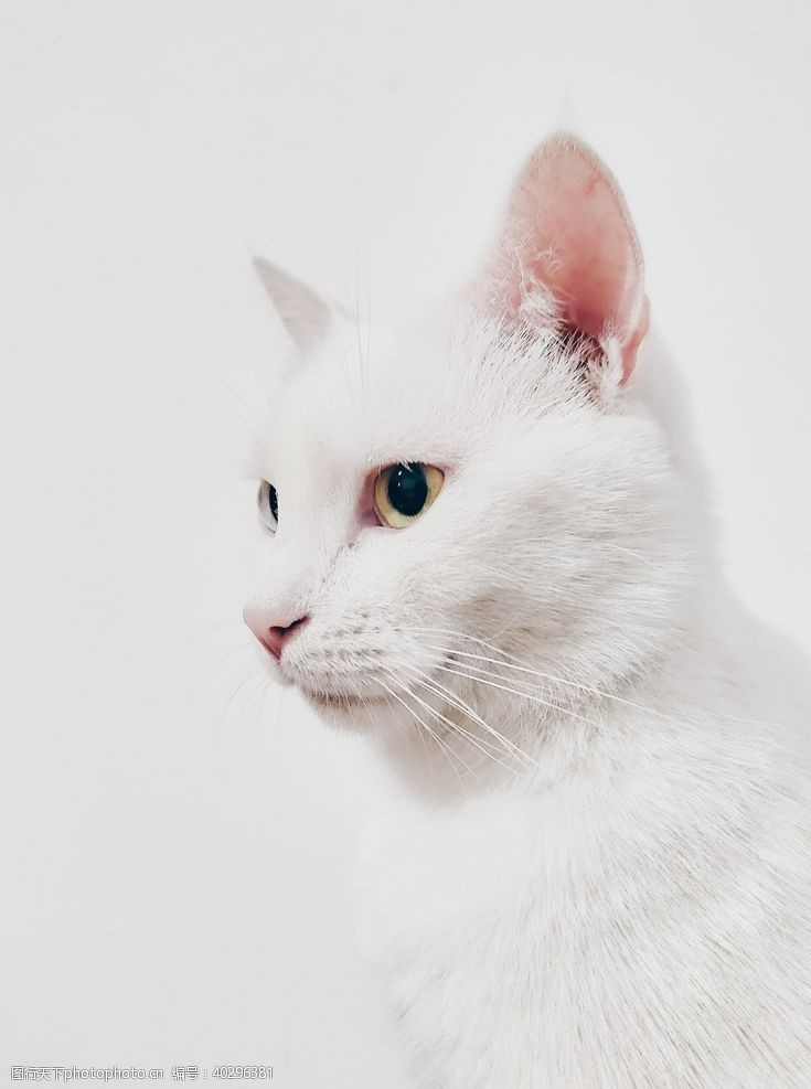 宠物猫猫图片