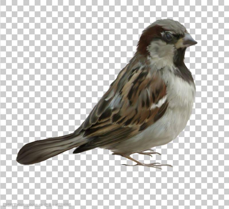 299dpi麻雀图片