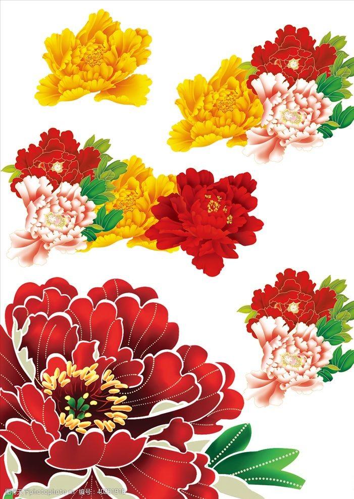 牡丹花素材图片
