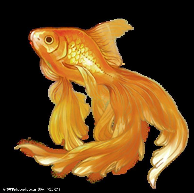 年年有鱼图片