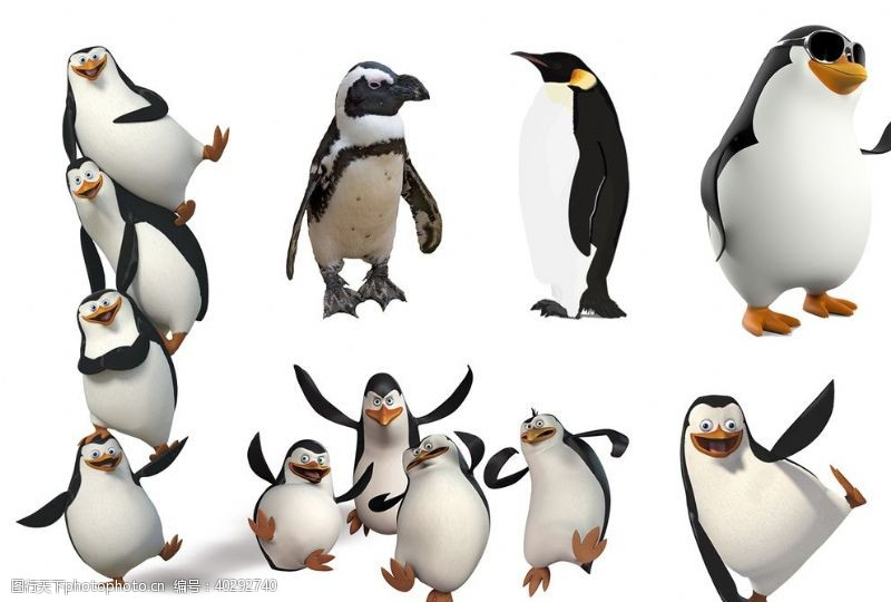分层图企鹅图片