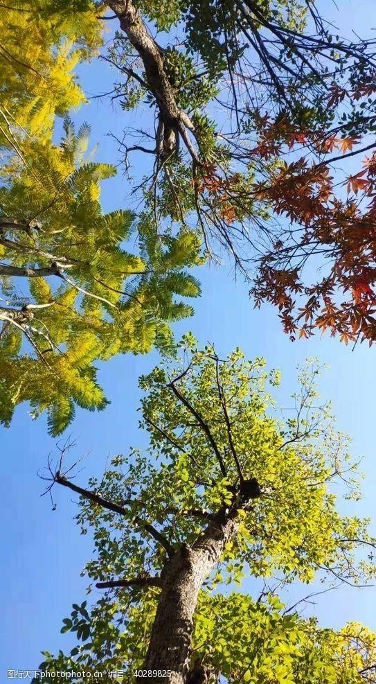 叶子秋日图片