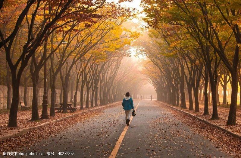 树林秋天街道落叶图片