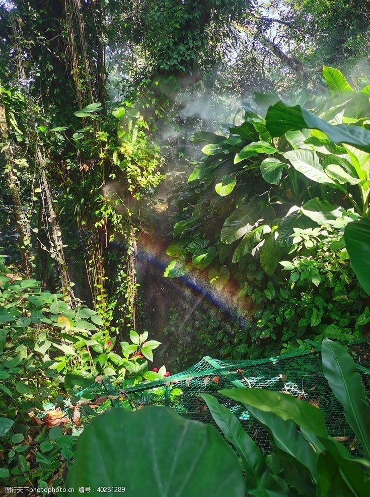 彩虹热带雨林图片