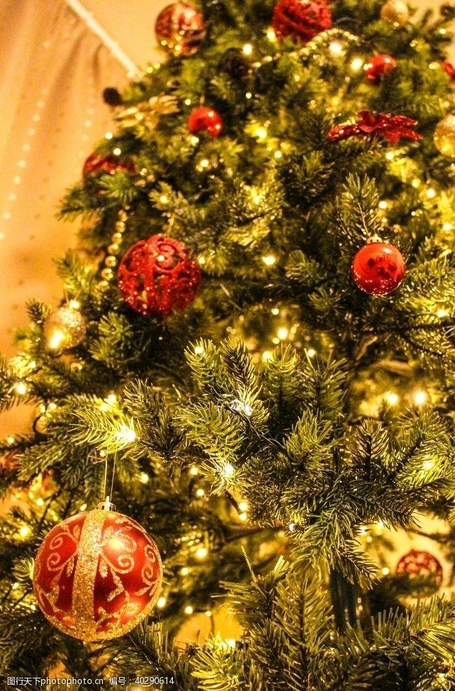 节日庆祝圣诞树图片