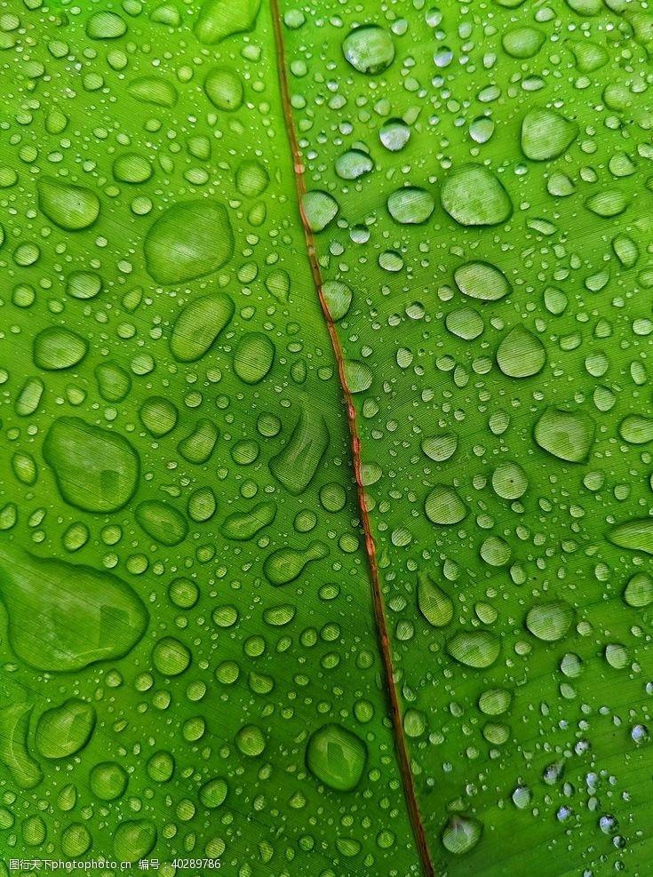 水珠水滴绿叶图片