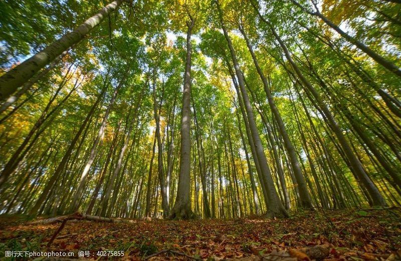 绿色树木图片
