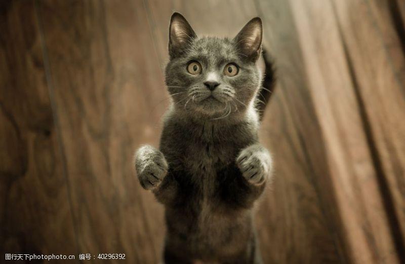 宠物小猫咪图片