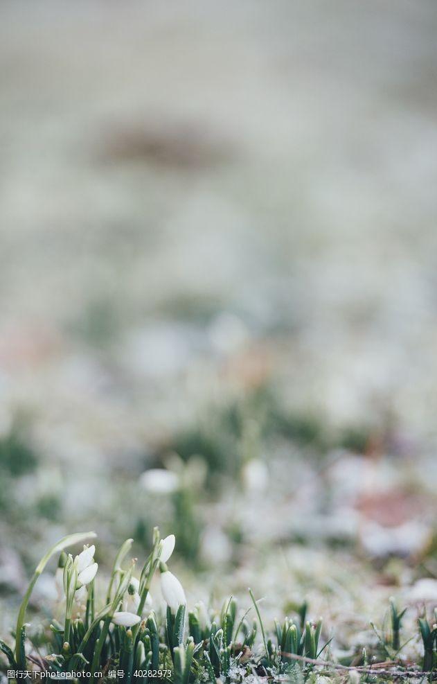 红色花朵雪滴花图片